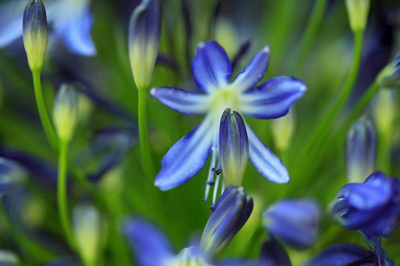Michel Bury - PHOTOGRAPHIE DE NATURE PHOTOGRAPHY: Fleur ...