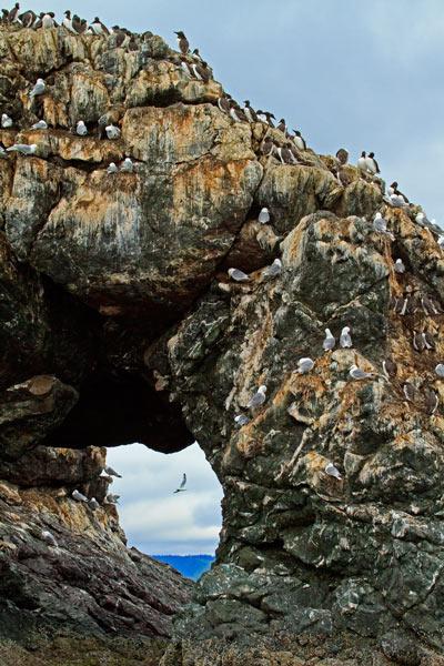 Rocher percé de Gull Island