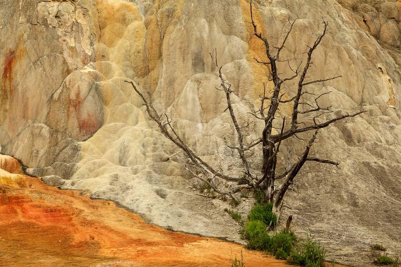 Orange Spring Mound avec arbre