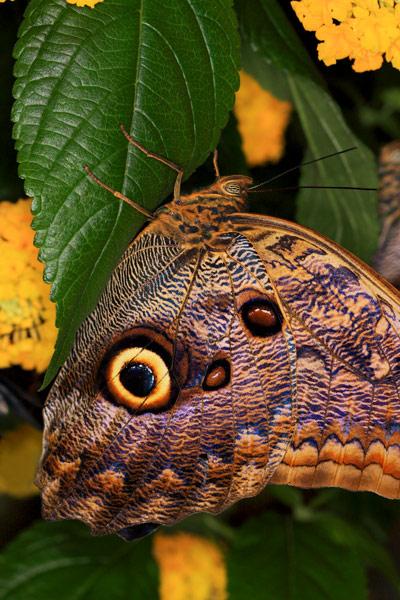 Papillon chouette et fleurs jaunes
