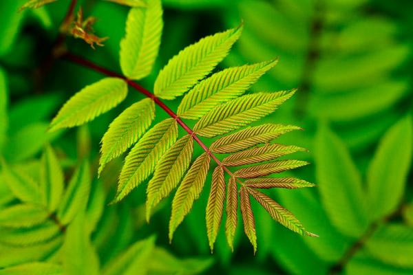 Plante verte et rouge au printemps