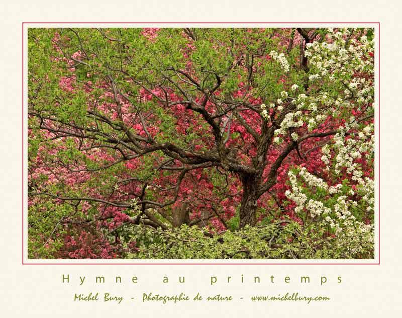 Hymne au printemps