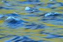 Reflets en eaux vives au printemps 1