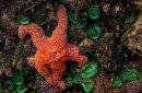 Étoile de mer 1