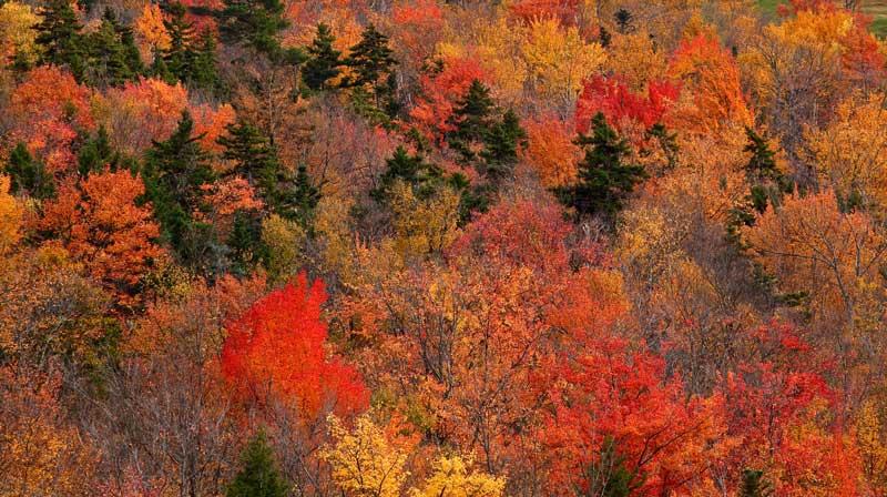 Mont Wildcat à l'automne - détail