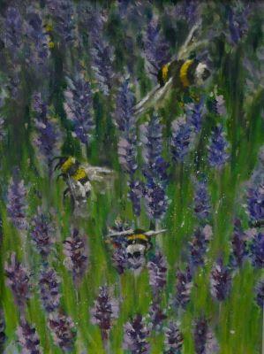 New Zealnd Bees