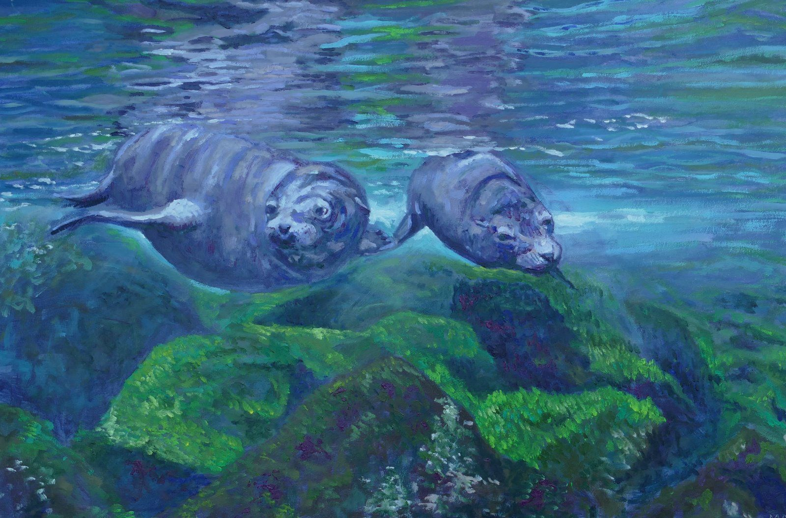 Seals playing in crystal blue waters