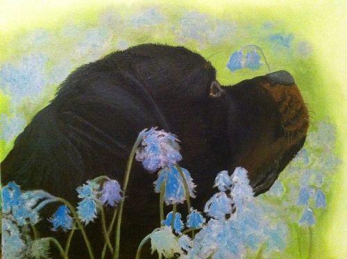 Rottweiler in bluebells
