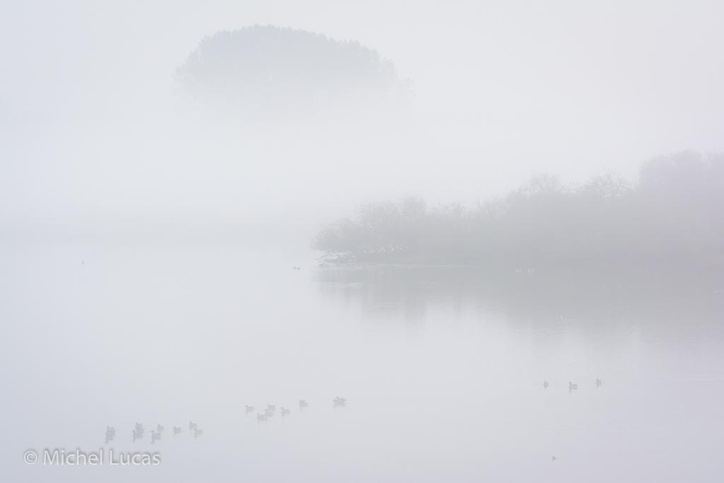 Ganzen in de mist, Oude Waal, Ooijpolder