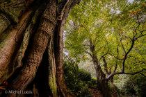 Oude boom, Heerlijkheid Beek