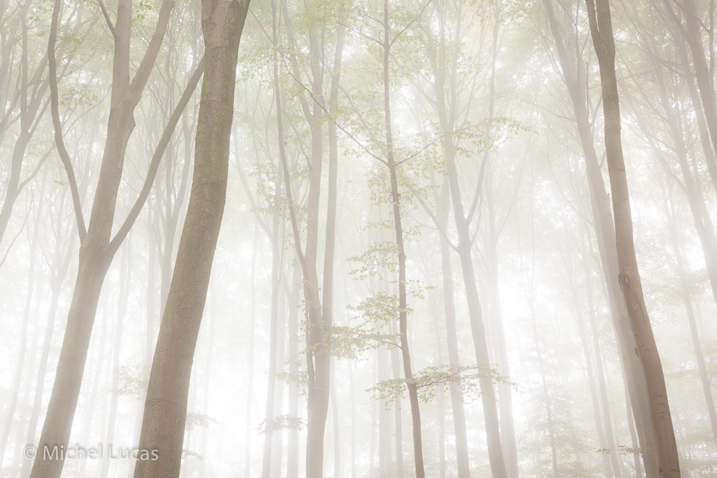 Beukenbos in mist, Sint Jansberg