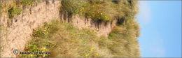 Bantham dunes 2