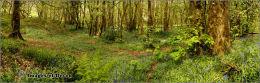 West Alvington woods.