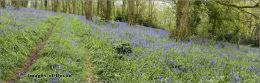 Stokenham woods.