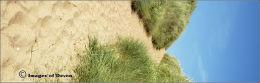 Thurlestone dunes.