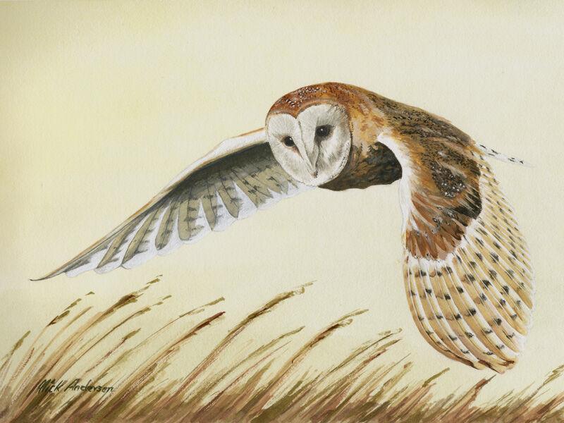 """""""Barn Owl In Flight"""""""