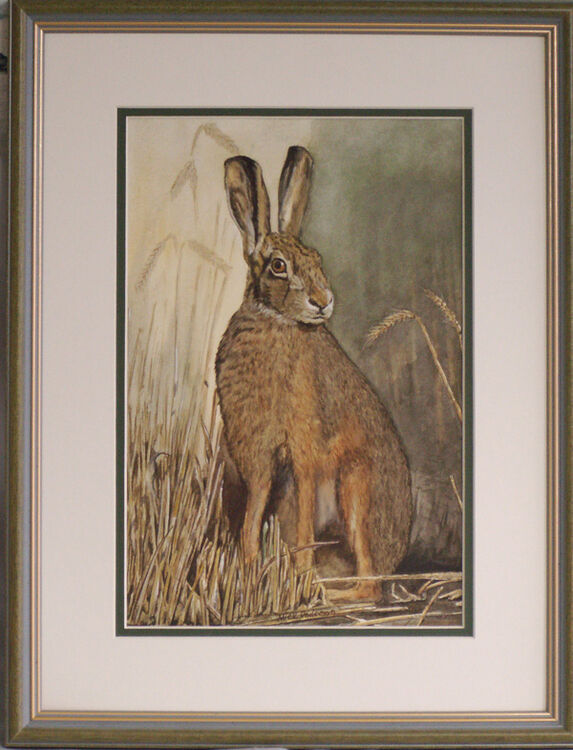 """""""Brown Hare"""""""