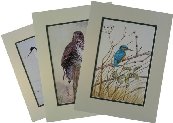 Prints are supplied in various sizes depending on the picture.