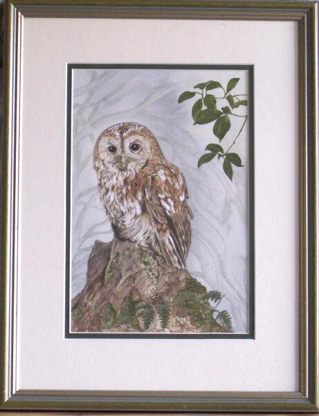 """Tawny Owl"""