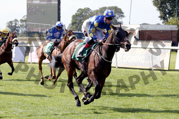 Race 3 - Alfies Angel (4)041