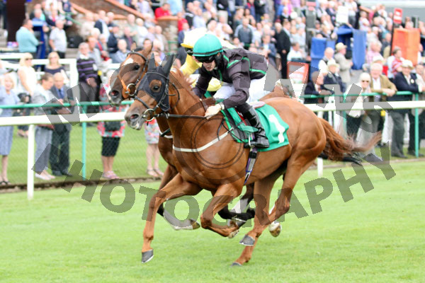 Race 3 - Mr Strutter (7)