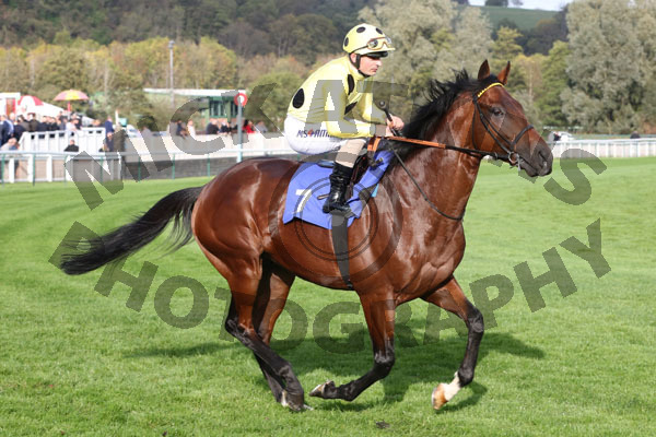 Race 5 (1) - Zeelander