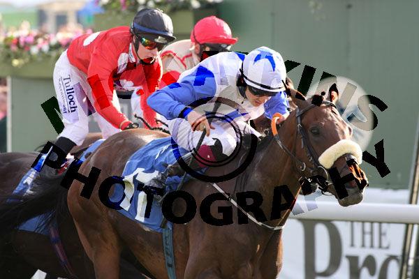 Race 7 - Shamad (5)