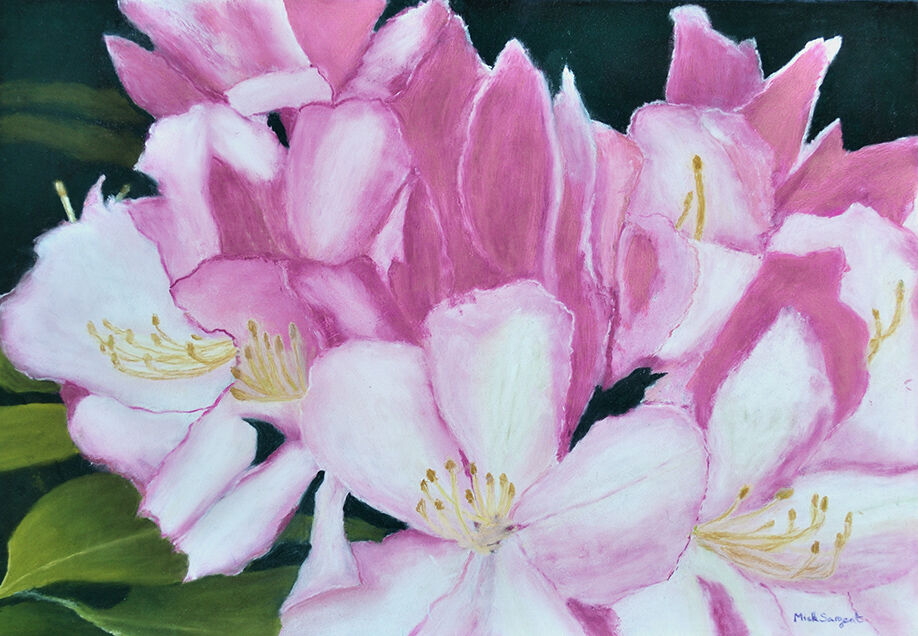'Rhododendron' .....unframed