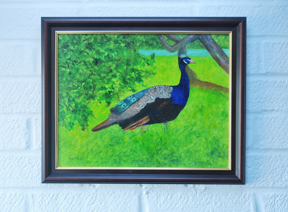 Peacock in the Shade..framed