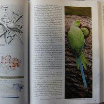 Berkshire Bird Atlas. Ring-necked Parakeet