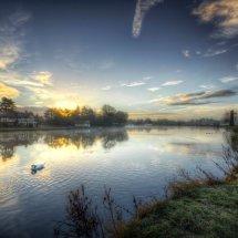 Swans at Dawn