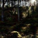 Harbottle Woods