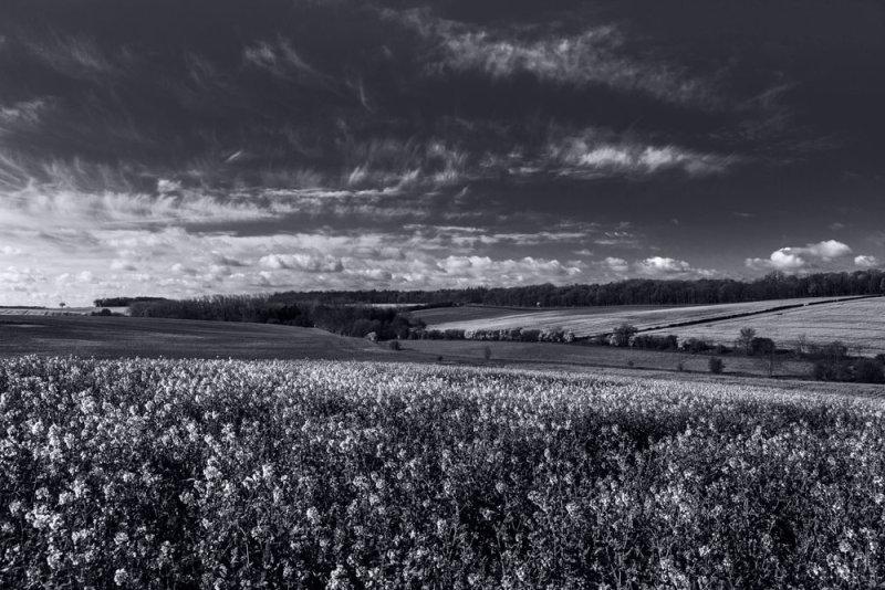 Landscape 2 <br>Saffron Walden