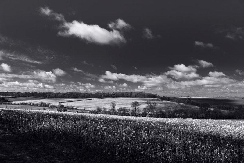 Landscape 3 <br>Saffron Walden