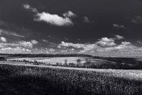 Landscape 3 Saffron Walden