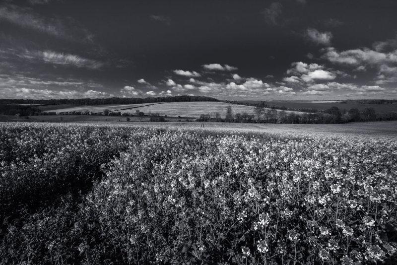 Landscape 1<br>Saffron Walden