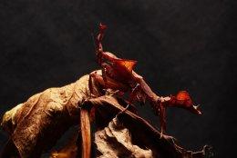 IMGL7910.3 Ghost Mantis