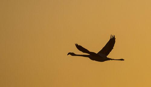 flamingo silhouette