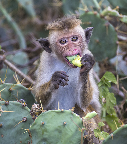 prickly lunch