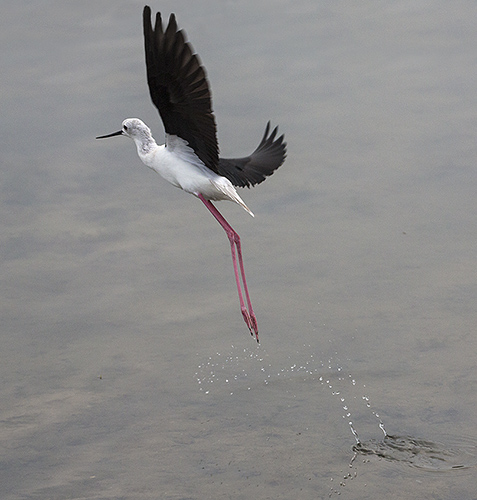 stilt take off