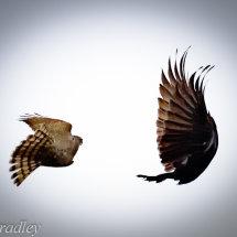 Aerial Ballet-1