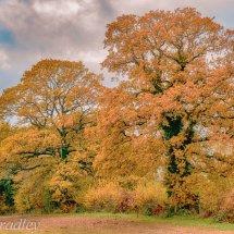 Autumn Oaks-2