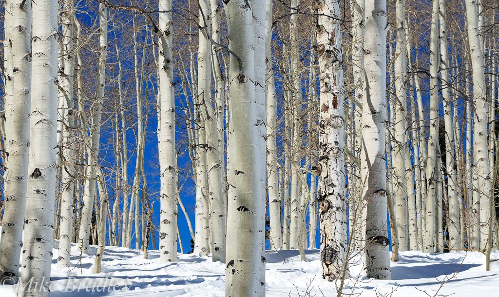 Eyes of the Aspens