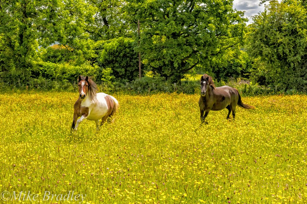 The Hay Meadow