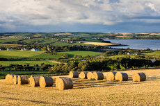 Straw bales and Courtmacsherry bay