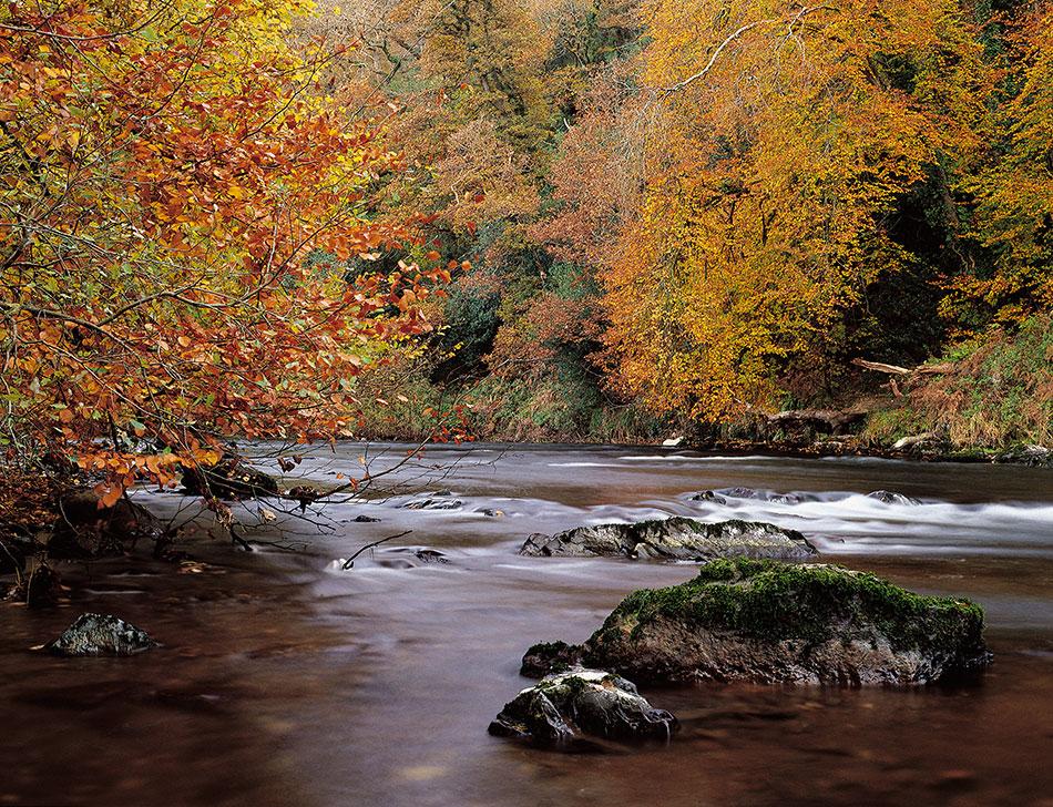 Autumn colours, Bandon river, West Cork