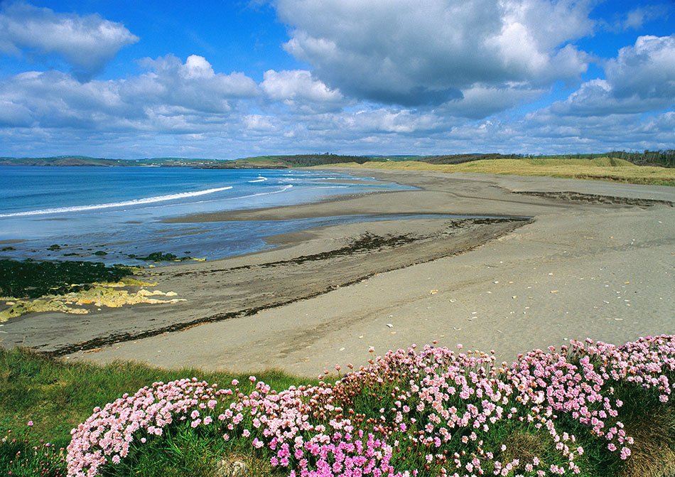 Long strand and sea pink, West Cork
