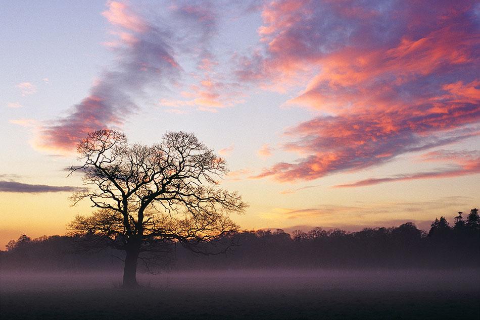 Tree at sunset, West Cork