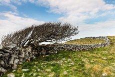 Burren wall, Co Clare