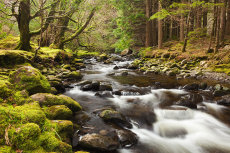 Torc river in spring, Killarney National Park, County Kerry
